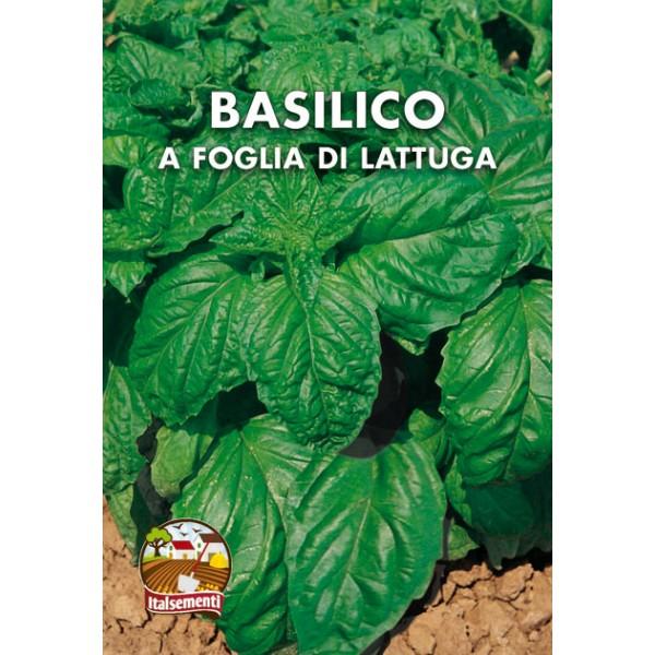 Basilico a Foglia di Lattuga