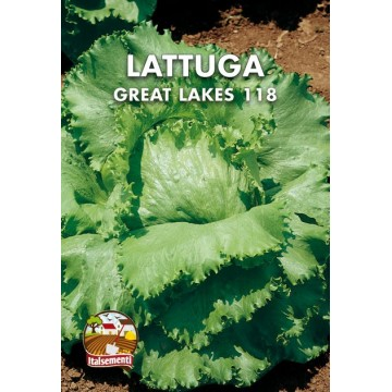 Lattuga Great Lakes 118...