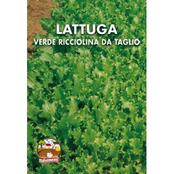 Lattuga Verde Ricciolina da...