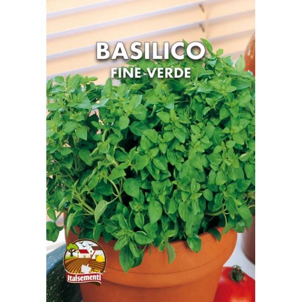 Basilico Fine Verde