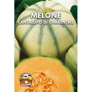 Melone Cantalupo di Charentais