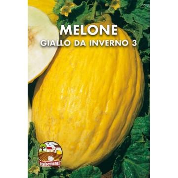 Melone Giallo da Inverno 3