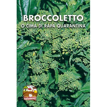 Broccoletto o Cima di Rapa Quarantina