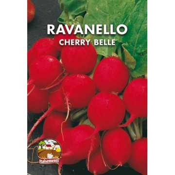 Ravanello Cherry Belle