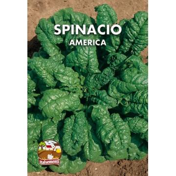 Spinacio America