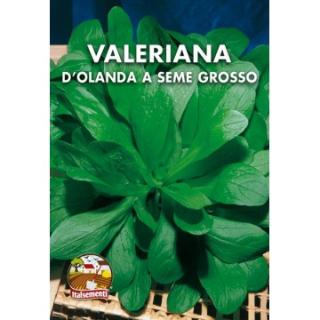 Valeriana d'Olanda a Seme...
