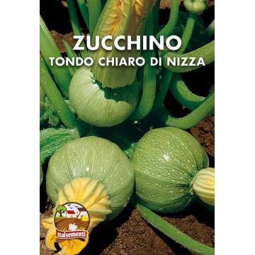 Zucchino Tondo Chiaro di Nizza