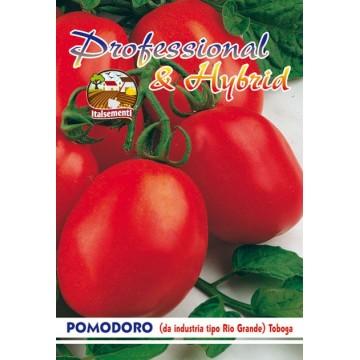 Pomodoro Rio Grande (da...