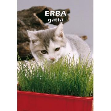 Erba Gatta