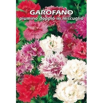 Garofano a Piumino Doppio...