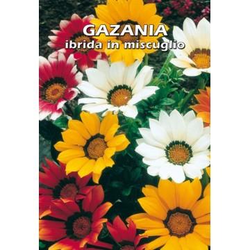 Gazania Ibrida in Miscuglio