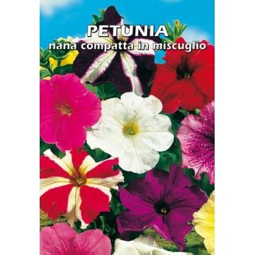 Petunia Nana Compatta in...