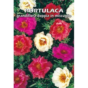 Portulaca Grandiflora Doppia