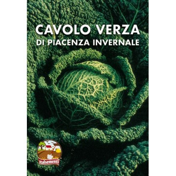 Cavolo Verza di Piacenza...