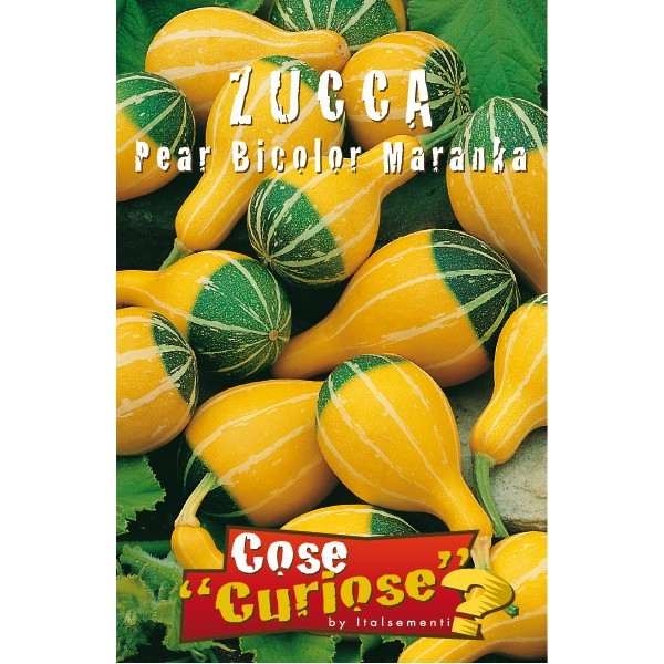 Zucca Pear Bicolor Maranka