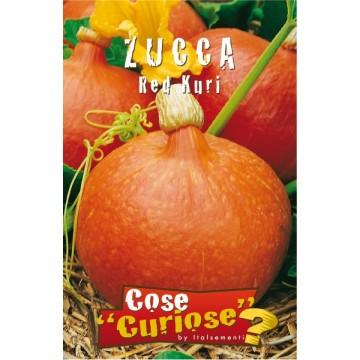 Zucca Red Kuri