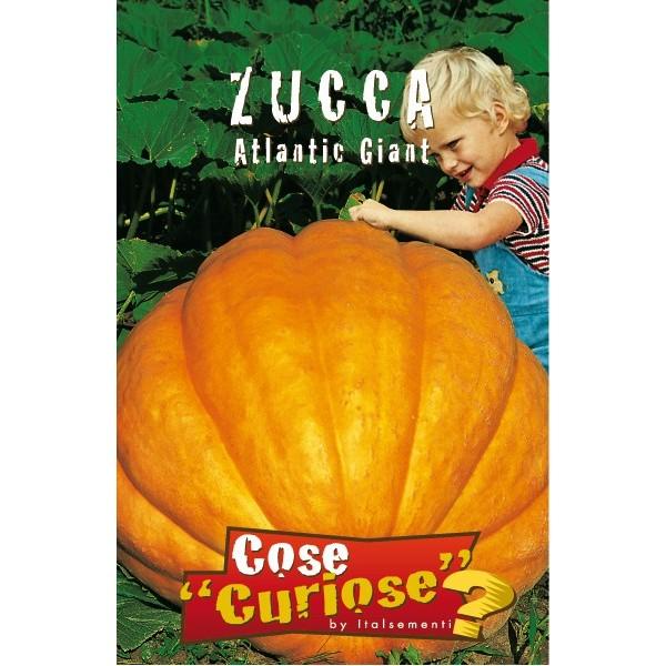 Zucca Atlantic Giant
