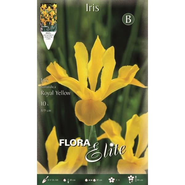 Iris Dutch Royal Yellow