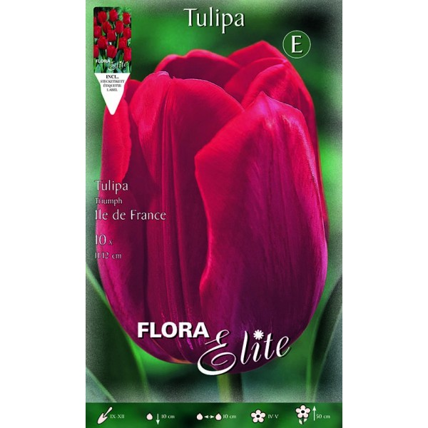 Tulipano Triumph Ile de France