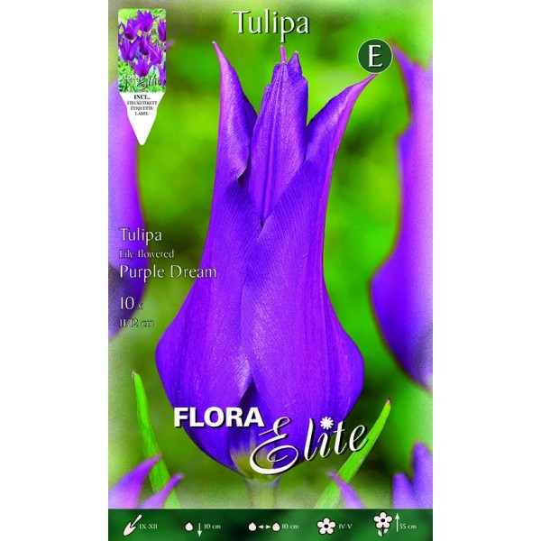 Tulipano Lily-Flowered Purple Dream