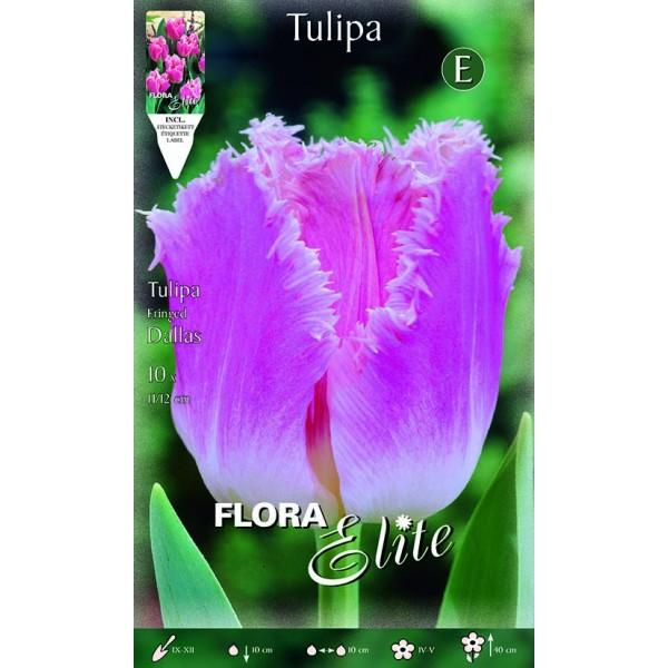 Tulipano Fringed Dallas