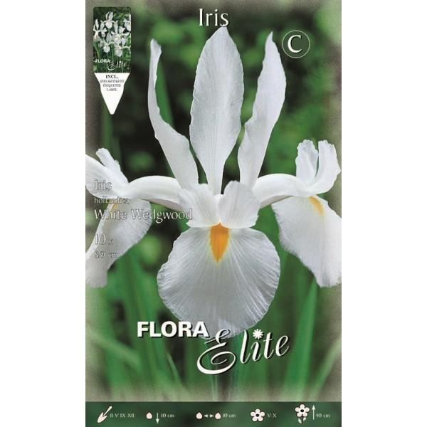 Iris Dutch Wedgewood