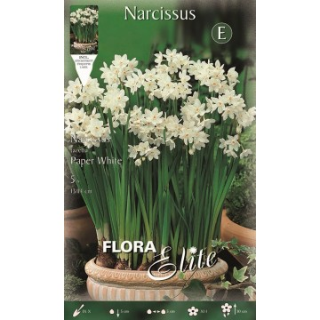 Narciso Christmas Flowering Paper White