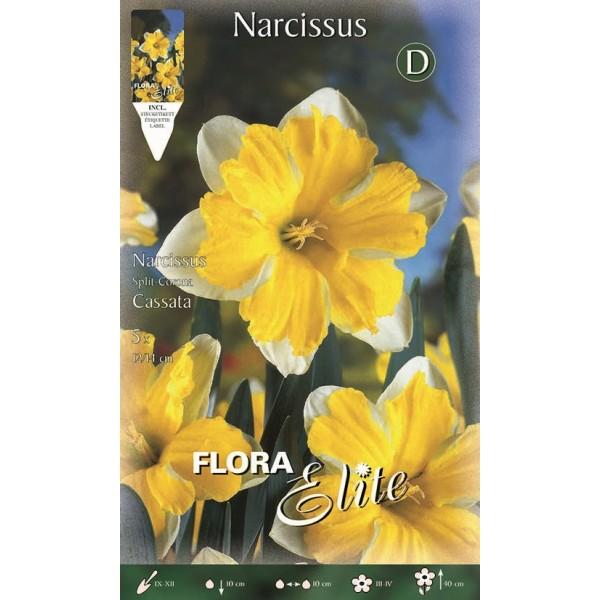Narciso Split Corona Cassata