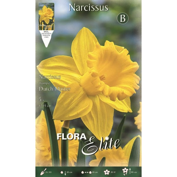 Narciso Trumpet Dutch Master