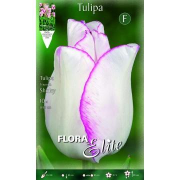 Tulipano Triumph Shirley