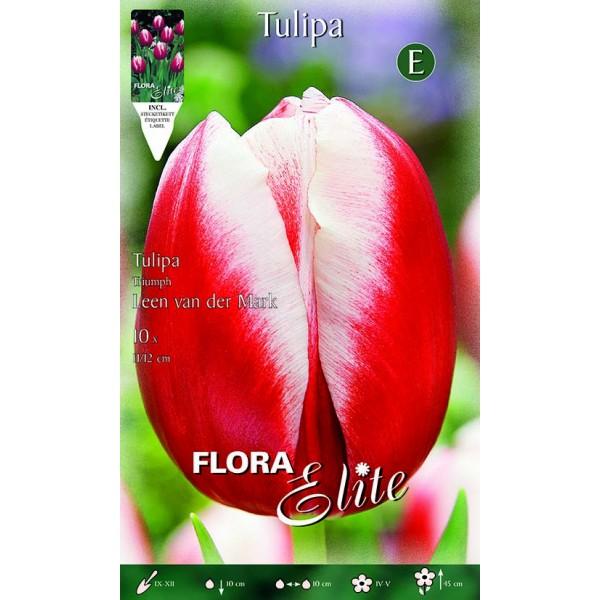Tulipano Triumph Leen van der Mark