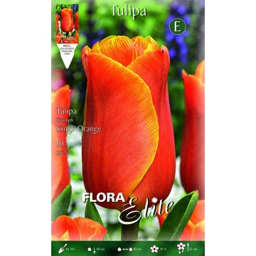 Tulipano Triumph Kings Orange