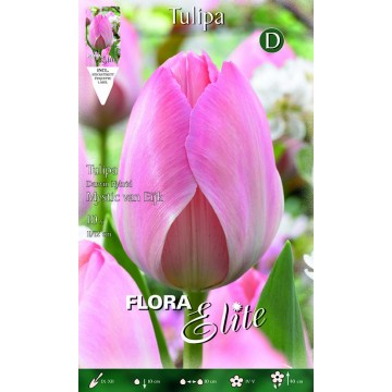 Tulipano Darwin Hybrid Mystic van Eijk