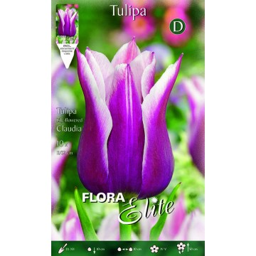 Tulipano Lily-Flowered Claudia