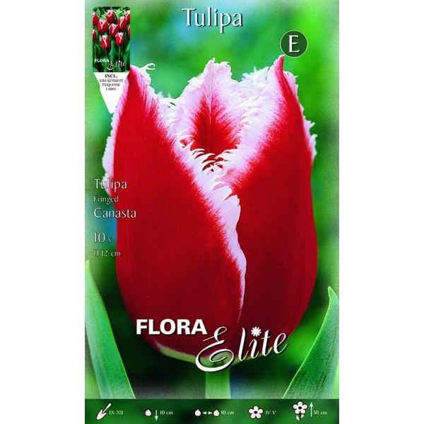 Tulipano Fringed Canasta