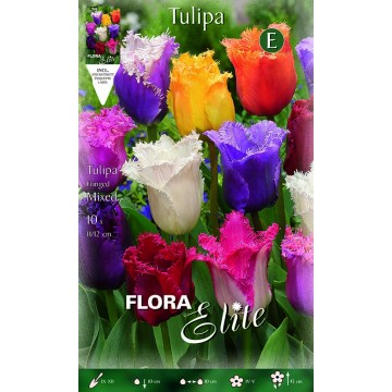 Tulipano Fringed Mixed