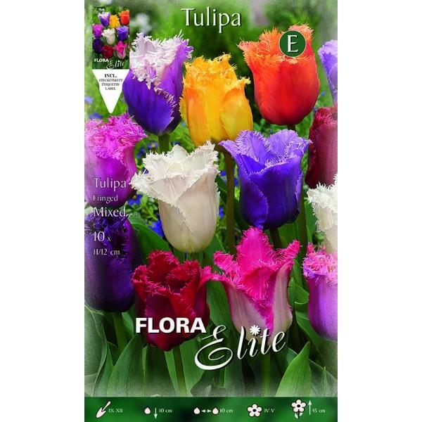Tulipano Fringed Mixed