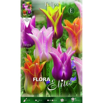 Tulipano Lily-Flowered Mixed