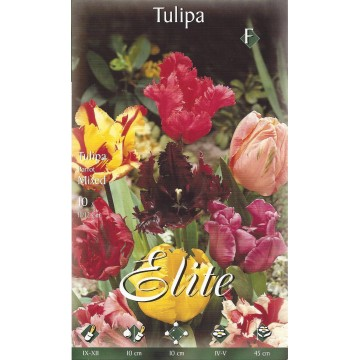 Tulipano Parrot Mixed