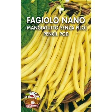 Phlox Grandiflora Nano in Miscuglio
