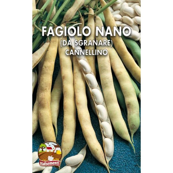 Fagiolo Nano Cannellino