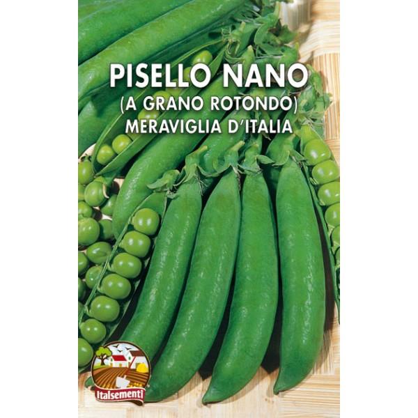 Pisello Nano Meraviglia d'Italia