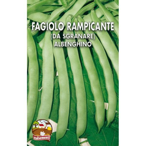 Fagiolo Rampicante Albenghino