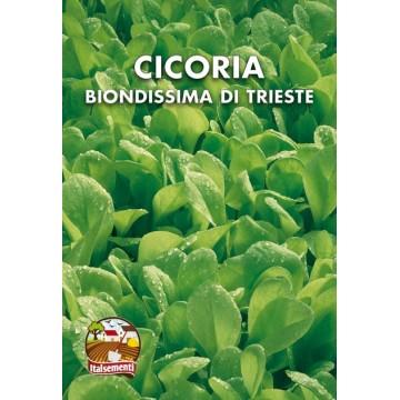 Biondissima di Trieste Chicory