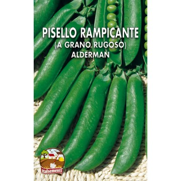 Pisello Rampicante Alderman