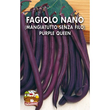 Fagiolo Nano Purple Queen