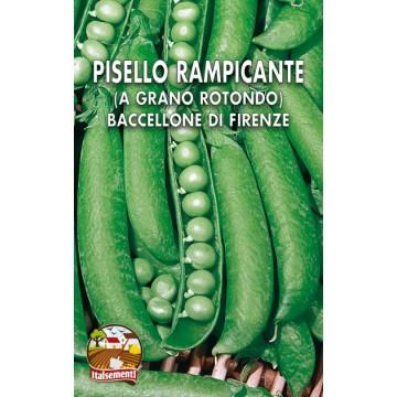 Pisello Rampicante Baccellone di Firenze
