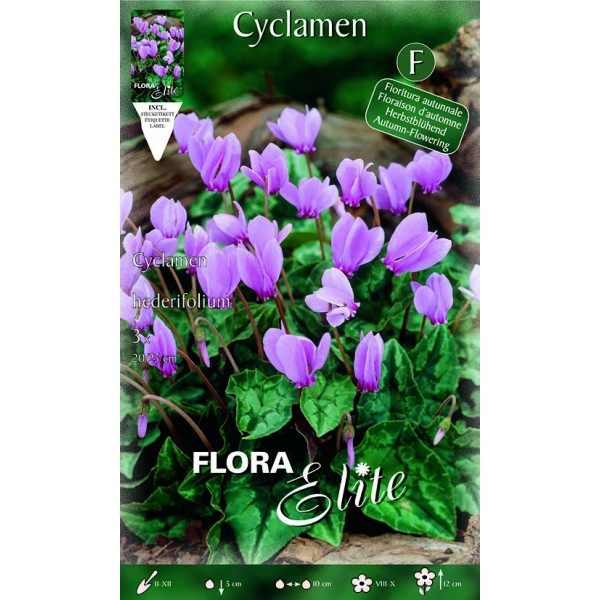 Ciclamino Hederifolium
