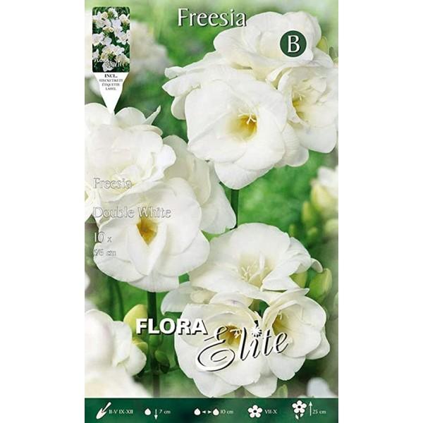 Fresia Double white