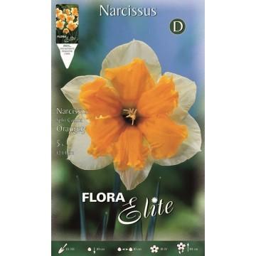 Narciso Split Corona Orangery